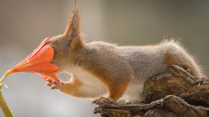 Photographer follows red squirrels daily for six years: here are 30 of his best and cutest shots