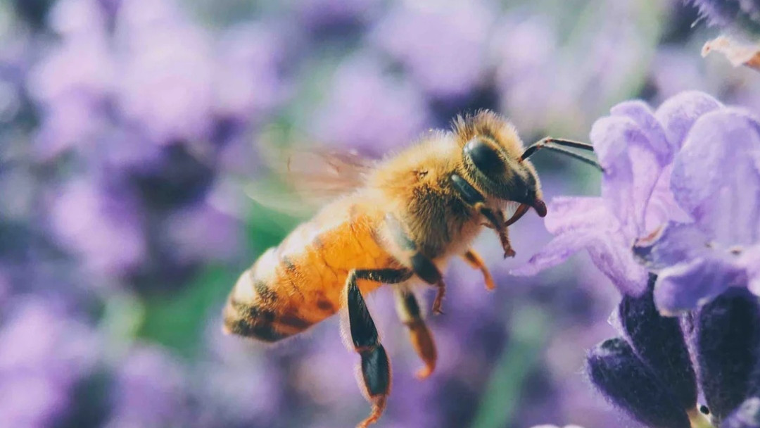 It's official... The Bee Is The Most Important Living Being On The Planet