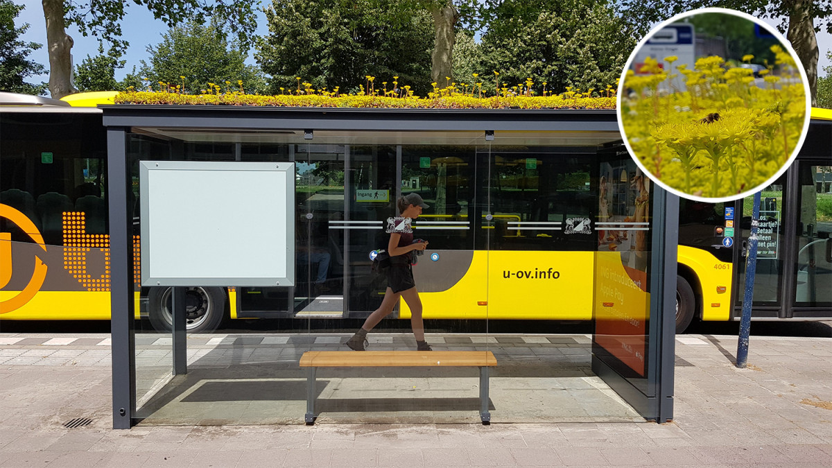 This Dutch city has transformed its bus 🚌 stops into bee 🐝 stops 🌼